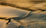 Sepia Wave